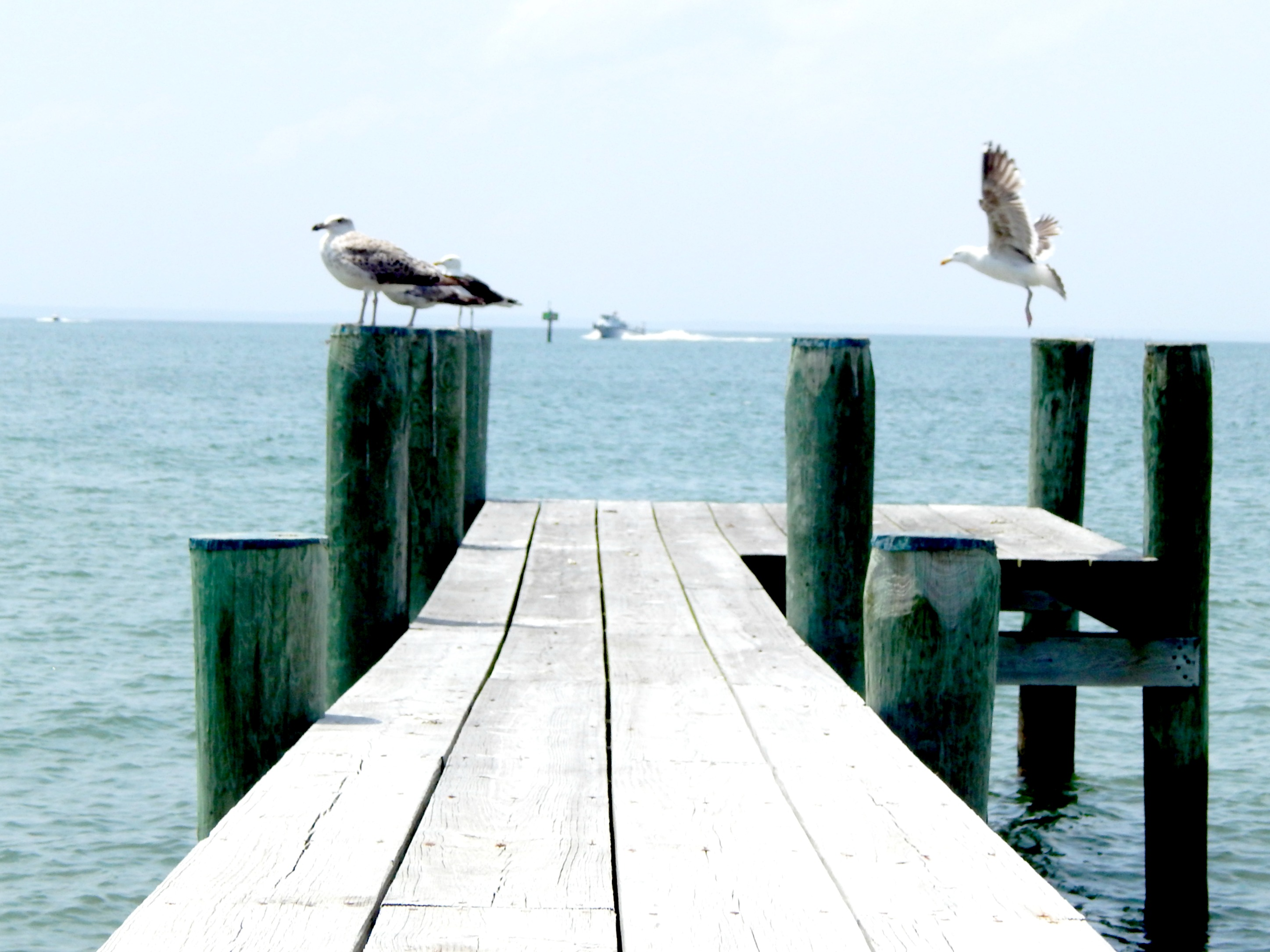 Seagulls on the dock on the Island