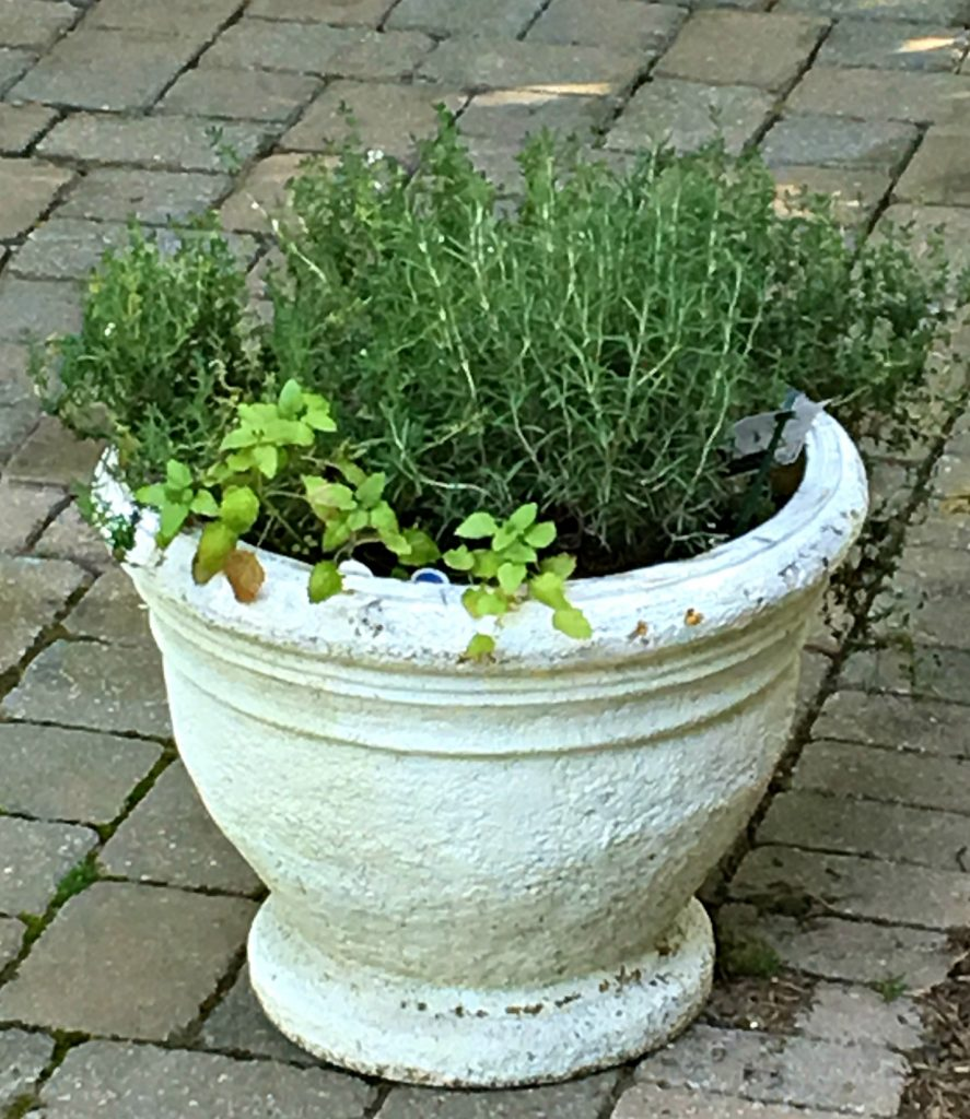 My potted herb garden